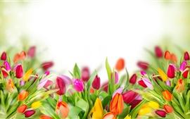 The-tulip-marine-glare-background_s